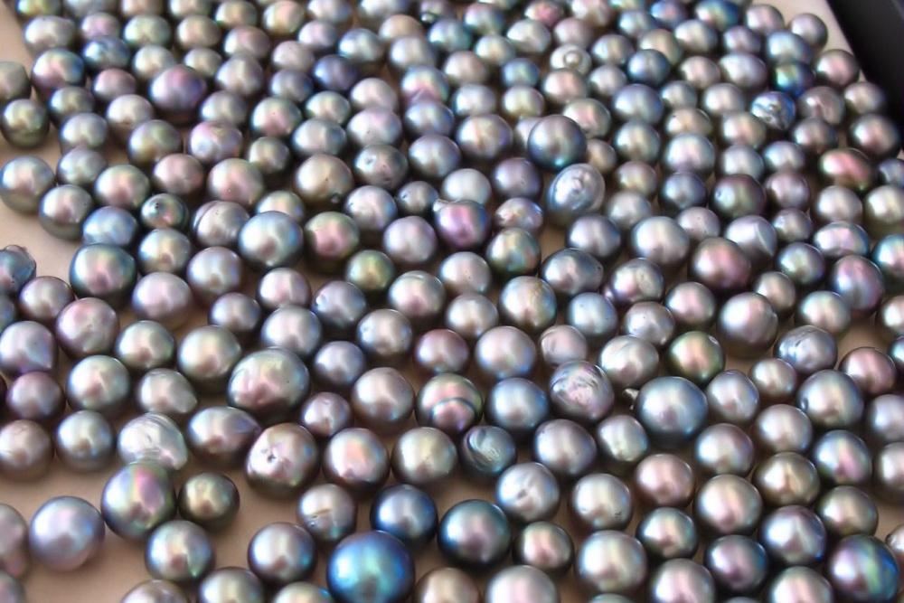 Rainbow Lipped Pearls Raw Pearls